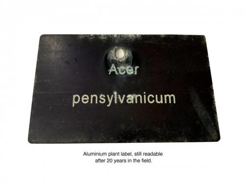 Aluminium plant label still readable after 20 years