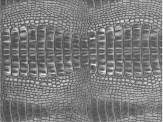 Scanned Crocodile Skin